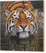 Portrait Of A Bathing Siberian Tiger Wood Print