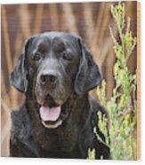 Portrait Of A Black Labrador Retriever Wood Print