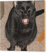 Portrait Of A Black Shorthair Cat With Open Mouth Wood Print