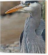 Portrait Of A Blue Heron Wood Print