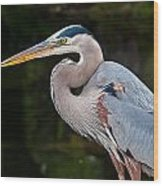 Portrait Of A Blue Heron Wood Print