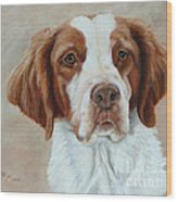 Portrait Of A Brittany Spaniel Wood Print