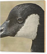 Portrait Of A Canadian Goose  Wood Print