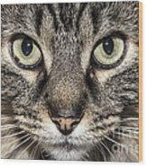 Portrait Of A Cat Wood Print