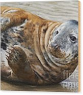 Portrait Of A Common Seal  Wood Print