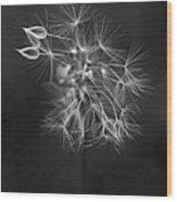 Portrait Of A Dandelion Wood Print