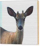 Portrait Of A Deer Wood Print