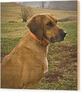 Portrait Of A Dog Wood Print