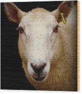Portrait Of A Ewe Wood Print