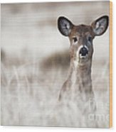 Portrait Of A Fawn Wood Print