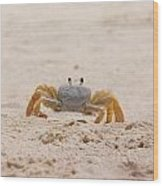 Portrait Of A Ghost Crab Wood Print