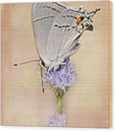 Portrait Of A Gray Hairstreak Wood Print