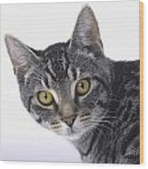 Portrait Of A Grey Tabby Catvancouver Wood Print