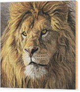 Portrait Of A Lion Wood Print