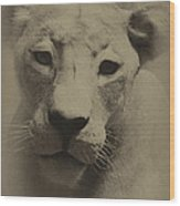 Portrait Of A Lioness Wood Print