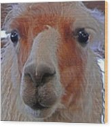 Portrait Of A Llama Wood Print