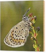 Portrait Of A Morning Dew Butterfly Wood Print