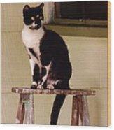 Portrait Of A Painted Cat Wood Print