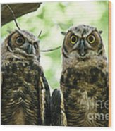 Portrait Of A Pair Of Owls Wood Print