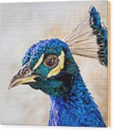 Portrait Of A Peacock Wood Print