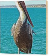 Portrait Of A Perky Pelican Wood Print by Brian D Meredith