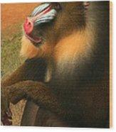 Portrait Of A Primate  Wood Print