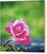 Portrait Of A Rose Wood Print