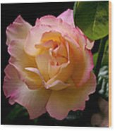 Portrait Of A Rose Wood Print by Rona Black