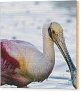 Portrait Of A Roseate Spoonbill Wood Print
