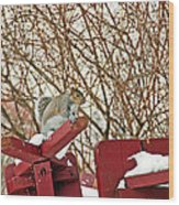 Winter Squirrel Wood Print