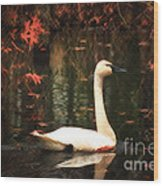 Portrait Of A Swan Wood Print
