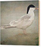 Portrait Of A Tern Wood Print