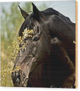 Portrait Of A Thoroughbred Wood Print