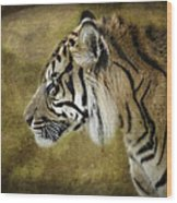 Portrait Of A Tiger  Wood Print