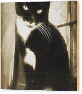 Portrait Of A Tuxedo Cat Iv Wood Print
