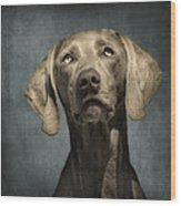 Portrait Of A Weimaraner Dog Wood Print by Wolf Shadow  Photography
