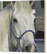 Portrait Of A White Horse Wood Print