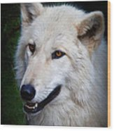 Portrait Of A White Wolf Wood Print