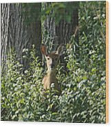 Portrait Of A Whitetail Fawn II Wood Print