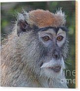 Portrait Of An Adult Patas Monkey II Wood Print