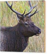 Portrait Of An Elk Wood Print
