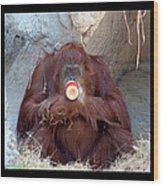 Portrait Of An Orangutan Wood Print