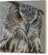 Portrait Of An Owl Wood Print
