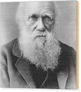 Portrait Of Charles Darwin Wood Print