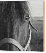 Portrait Of Horse In Black And White Wood Print