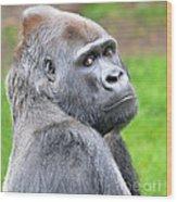 Portrait Of King Kongs Cousin II Wood Print