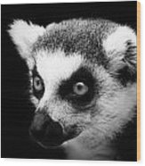 Portrait Of Lemur In Black And White Wood Print