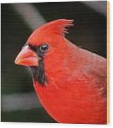 Portrait Of Male Cardinal Wood Print