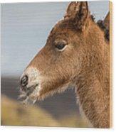 Portrait Of Newborn Foal Wood Print