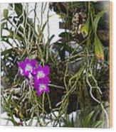Portrait Of Orchids Wood Print